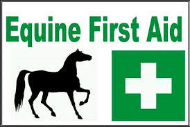 Equine First Aid Level 3