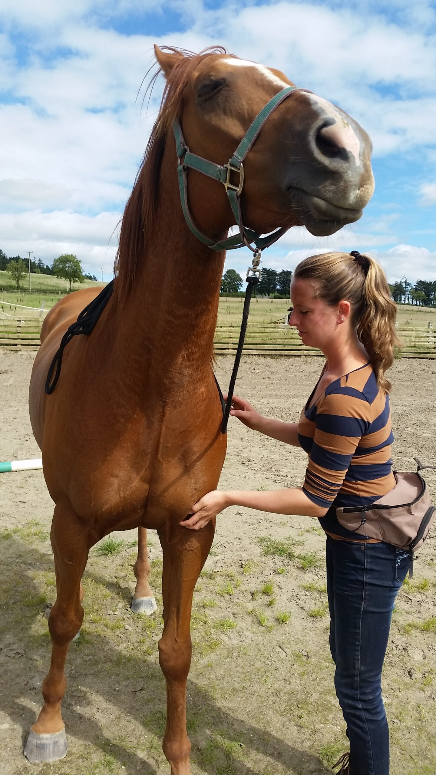 Demo: A healthy horse is a happy horse