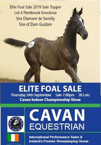 ELITE FOAL SALE