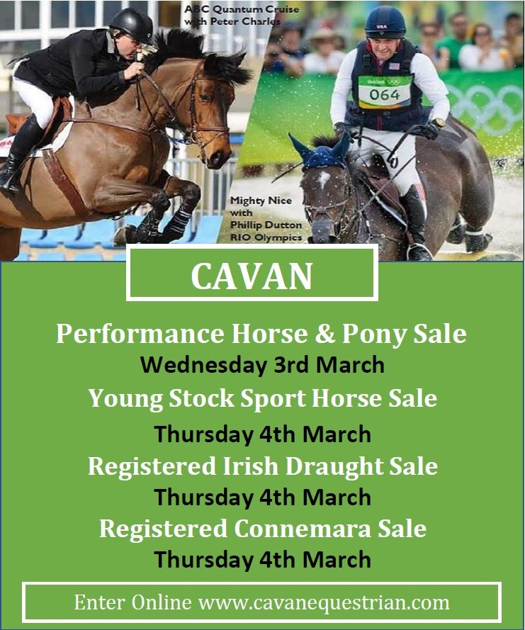 Young Stock Sport Horse , Registered Irish Draught , Registered Connemara Sales