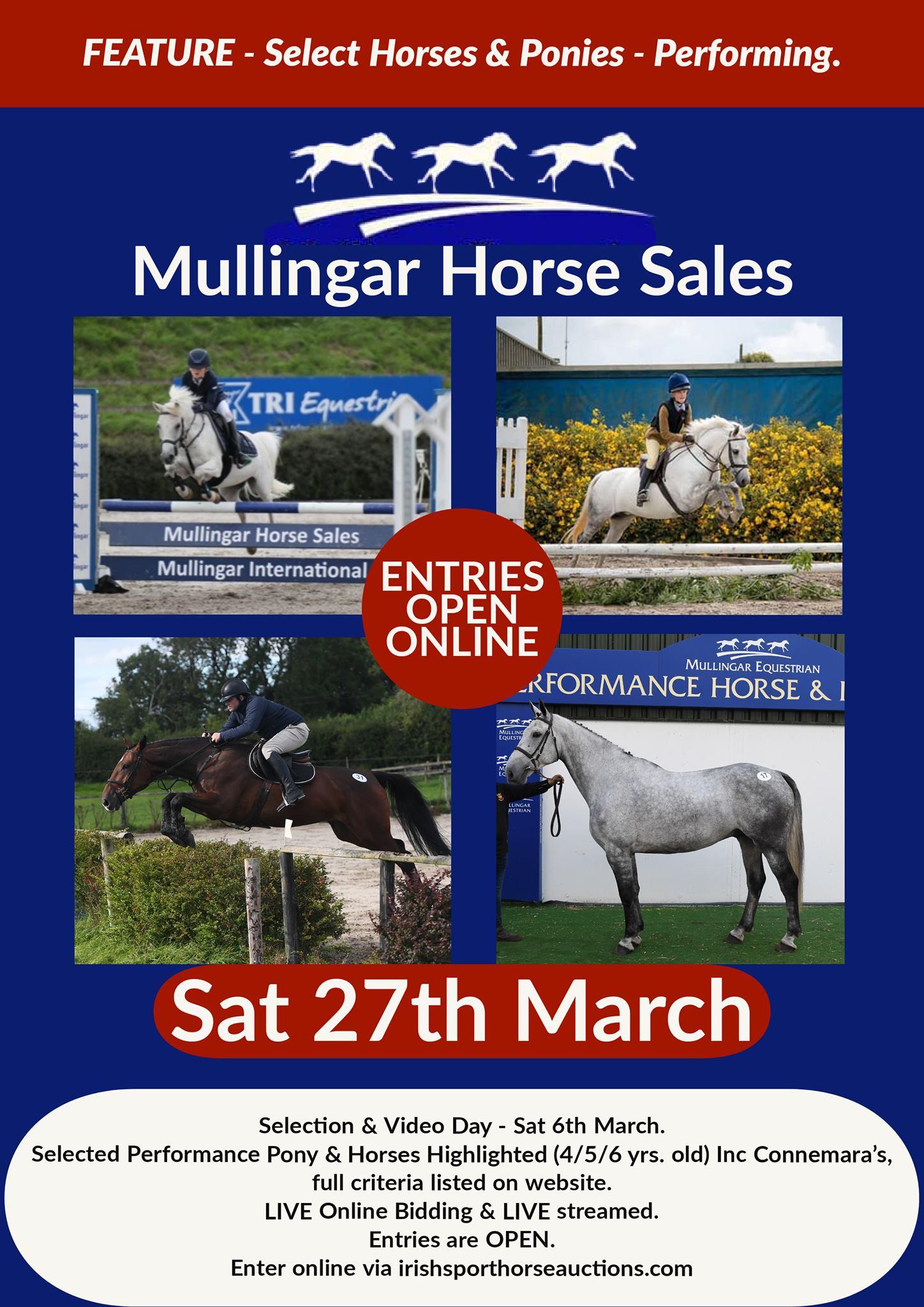 Performance Horse & Pony Sale