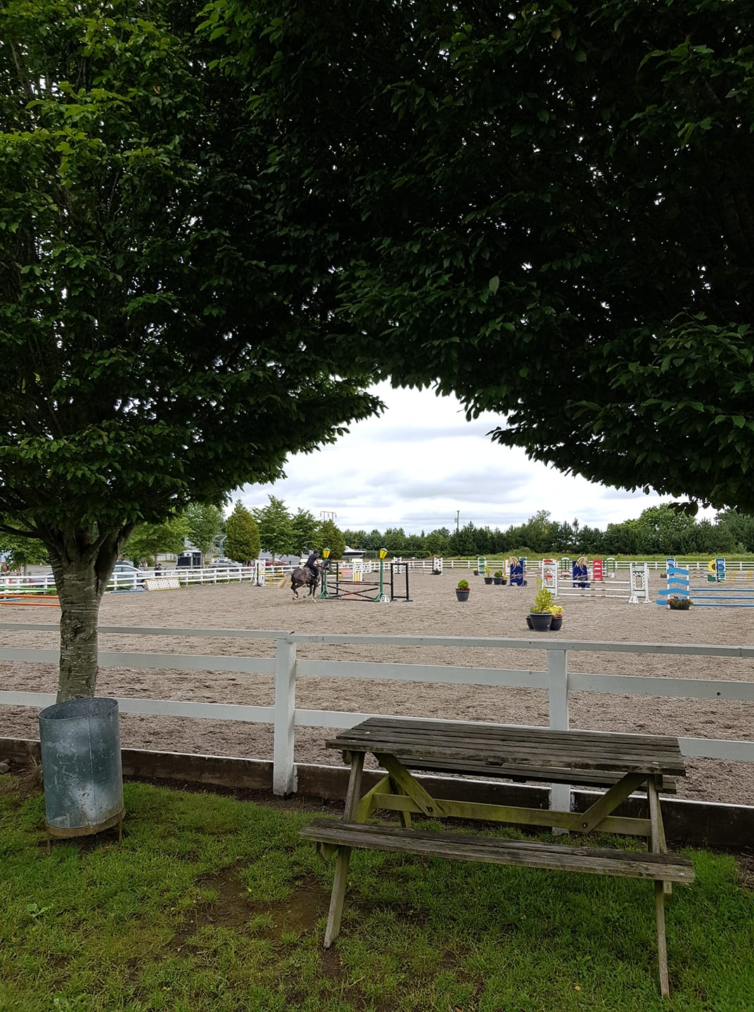 Coilog Pony Classic Show and Coolmore Pony Premier