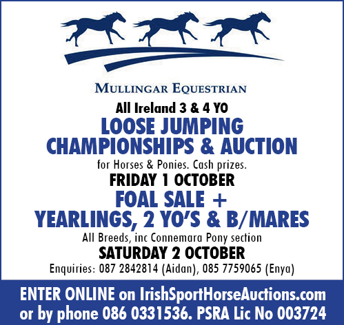 All Ireland Loose Jumping Competition and Auction