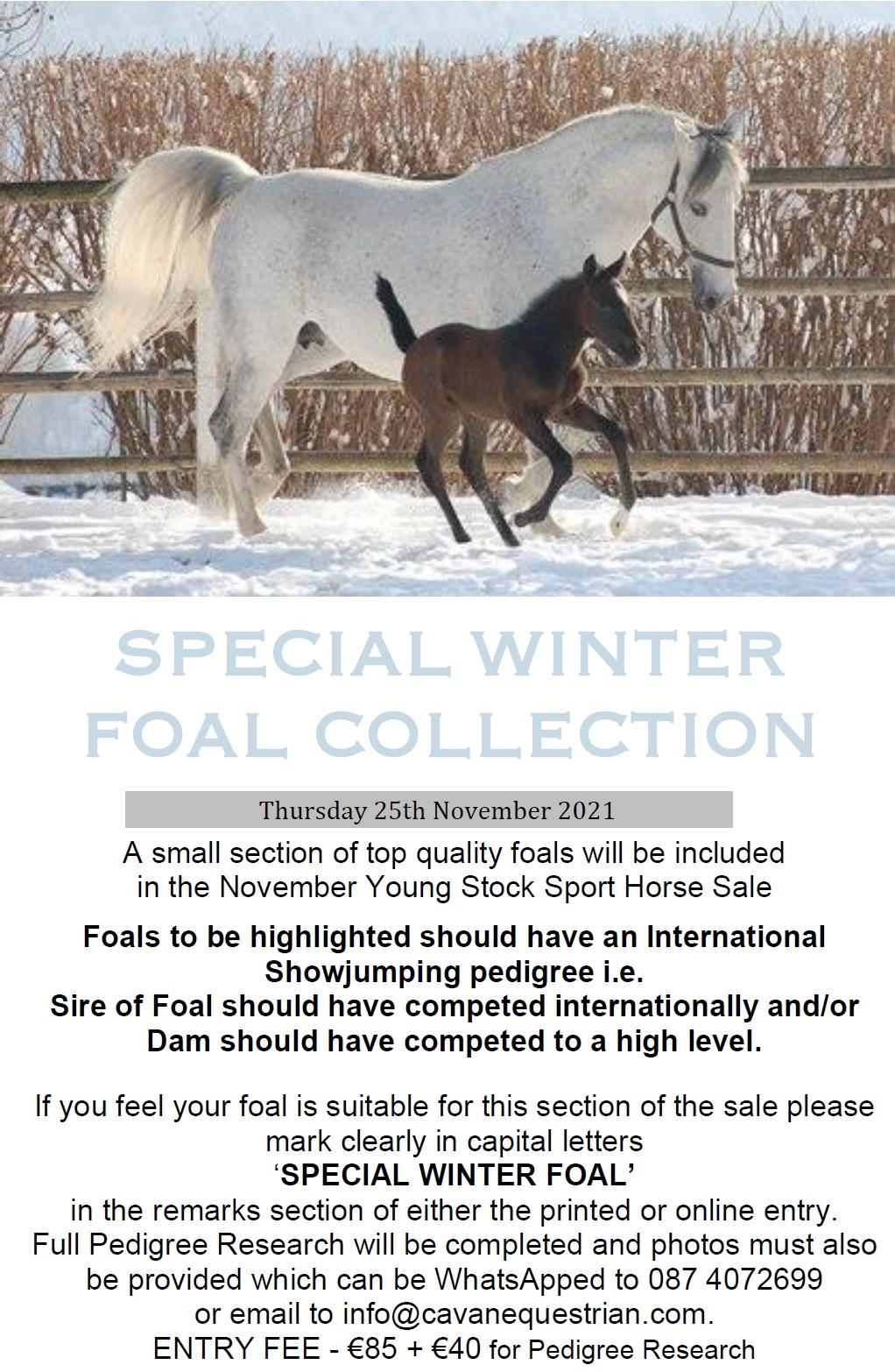 CAVAN YOUNG STOCK SPORT HORSE SALE